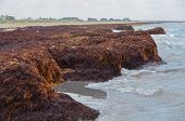 Seaweed Cliffs Buildup at Matagorda Beach