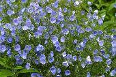 Feld Blumen - 1