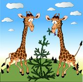 Caricature of two fun giraffes eating the fir tree in the North.