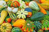 image of gourds  - Colorful pumpkins collection on the autumn market - JPG