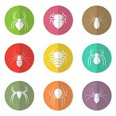 stock photo of black widow spider  - Vector group of spider in the circle on white background - JPG