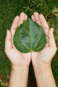 Hands Holding Heart Shape Leaf