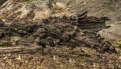 Dead Log Tree