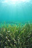 Sea Grass underwater