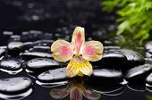 beautiful orchid with black stones �¢�?�?green plant background