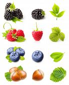 Summer berry fruits. Raspberry, Blackberry,Blueberry and Hazelnuts Isolated on White Background