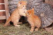Cute little red kittens playing on wicker mats background, outdoors