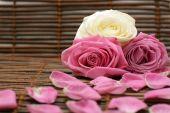 Rose And Rose Petals