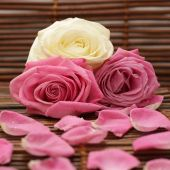 Pink And White Roses And Rose Petals