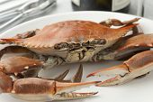 image of cooked blue crab  - Cooked blue crab on a plate - JPG