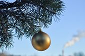 The Golden Ball On A Branch Of The Christmas Tree.