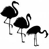 stock photo of flamingo  - Black silhouette of three flamingos on white background - JPG