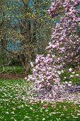 Magnolia And Grass