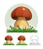 Cep. Mushroom. Eps10 vector illustration. Isolated on white background