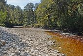 The Oparara River Near Karamea, New Zealand