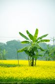 Green flower and banana tree
