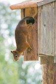 Squirrel Birdhouse