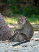 Monkey on the beach in KrabiThailand