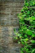 image of oregano  - oregano on a dark wood background - JPG