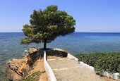 Beautiful summer view of a lone pine and the Aegean Sea.
