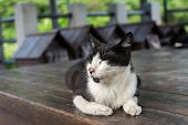 Tuxedo cat lying and sleeping on the chair made �?�¢??�?�¢??of wood in the cat village of Houtong, Taiwan.