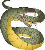 foto of green snake  - Snake Green and Yellow Fangs Forked Tongue vector illustration - JPG