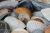 Be Unique - Interesting Seashell