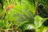 Palm Leaf In The Garden