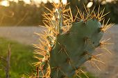 Close-up of cactus plant with warm light