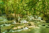 Waterfall In Forest With Tree