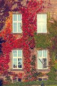 Climbing Vines Of Ivy On A House, Vintage Look