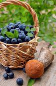Blueberries In Wicker Basket And Leccinum Mushroom