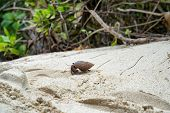 picture of hermit  - Side View of Hermit Crab Crawling on Sand - JPG