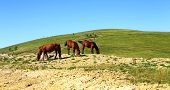 Horses On The Autumn Caucasus Meadow