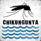image of mosquito  - Mosquito with standing water - JPG