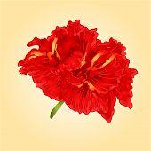 stock photo of hibiscus flower  - Flower red hibiscus blossom simple tropics flower vector illustration - JPG