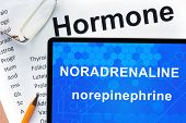 stock photo of hormone  - Papers with hormones list and tablet  with words  noradrenaline  - JPG