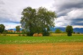 picture of hay bale  - Panoramic view  with hay bale field - JPG
