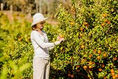 stock photo of mandarin orange  - Smiling caucasian girl in white tshort and hat harvesting mandarins and oranges in organic farm - JPG