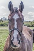 stock photo of pastures  - Curious horse stares directly at you from it - JPG