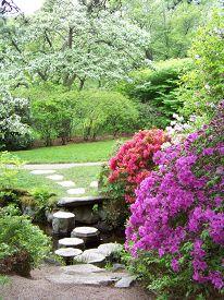 foto of azalea  - These quaint stepping stones leads one right to the azaleas in full bloom in Asticou Azalea Garden in Maine - JPG