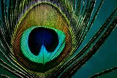 Ojo de una pluma de pavo real