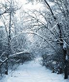 Постер, плакат: Заснеженный путь в зимний лес Тонированные картина