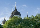 Alexander Nevsky Church Cupolas Above Trees