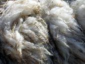 Natural Wool Close Up