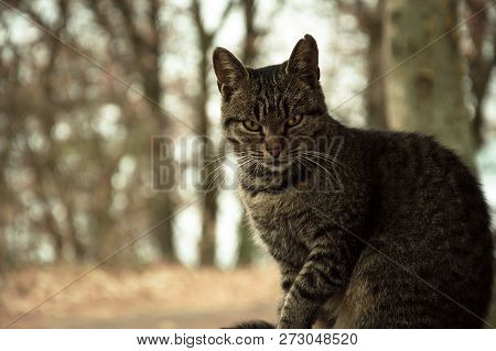 poster of Cat Pictures, Cat Eyes, Pictures Of The Most Beautiful Cat Eyes, Cute Cat, Close-up Cat Pictures