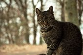 Cat Pictures, Cat Eyes, Pictures Of The Most Beautiful Cat Eyes, Cute Cat, Close-up Cat Pictures poster
