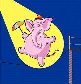 Elephant Tightrope Walker