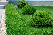 Garden Bushes Are Evergreen, Landscape Design Of Green Grass And Deciduous Bushes Shot In A Round An poster