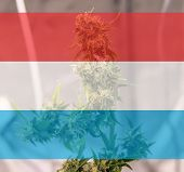 Legalization Of Recreational Marijuana Use In Luxembourg. Cannabis Legalize In Luxemburg poster